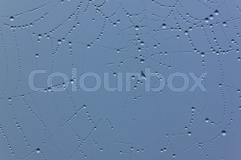 Stock image of 'Close up of cobweb with rain drops'