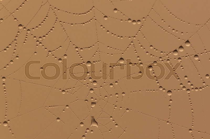 Stock image of 'Golden background with rain drops on cobweb'