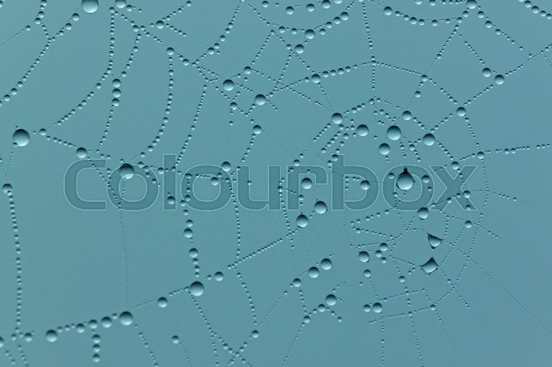 Stock image of 'Aqua background with close up of rain drops on cobweb'