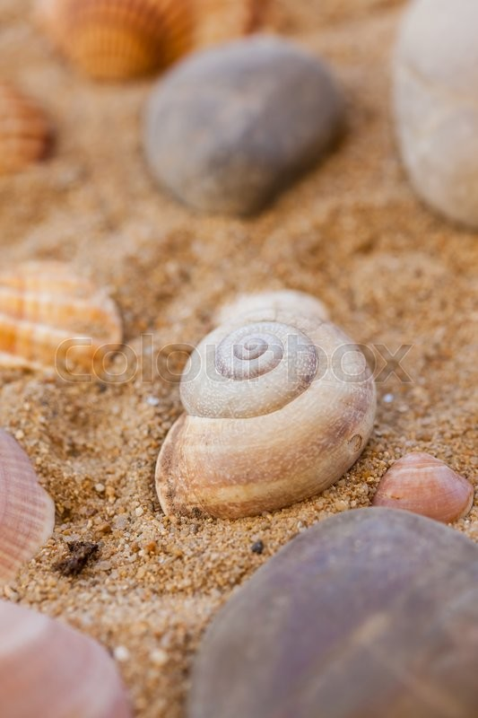 Stock image of 'Natural sea shells on sand'