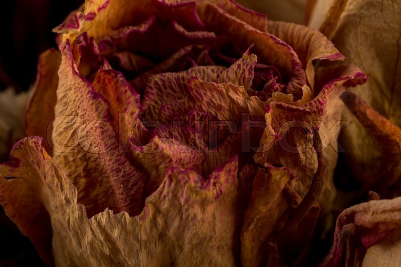Stock image of 'Decoration of dried flowers. Roses close up photo'