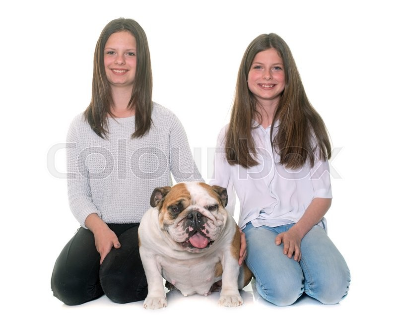 Stock image of 'english bulldog and girls in front of white background'