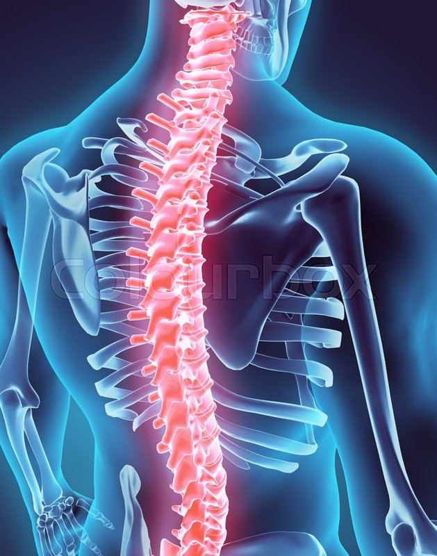 Stock image of '3D illustration of Spine - Part of Human Organic.'