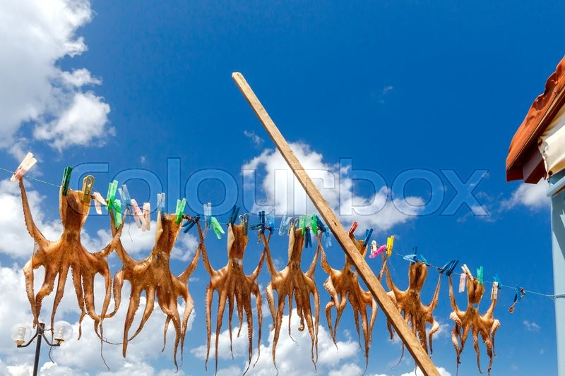 Stock image of 'Drying octopus on the clothesline with clothespins against the blue sky. Crete, Greece.'