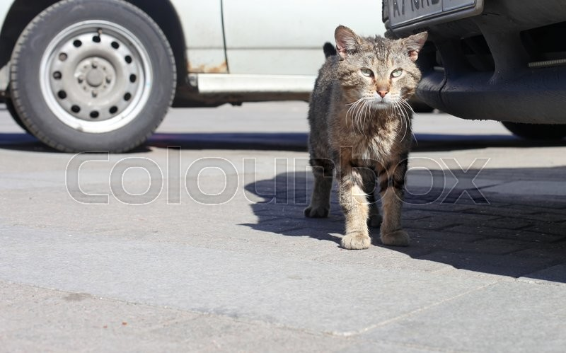 Stock image of 'homeless city street cat close up portrait'