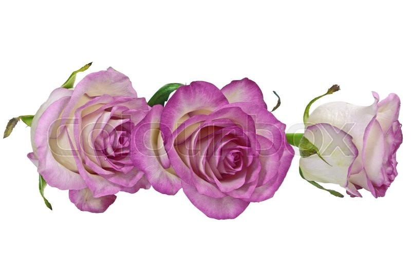 Stock image of 'Bouquet of roses on white background'