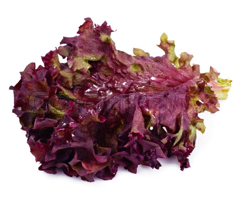 Stock image of 'Red Lettuce Isolated on White Background Studio Photo'