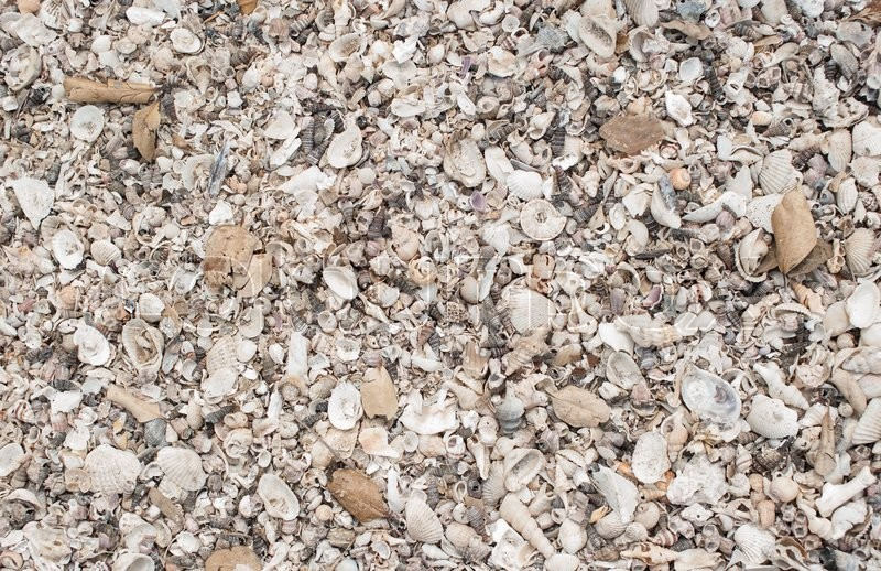 Stock image of 'Natural sand and shells background'