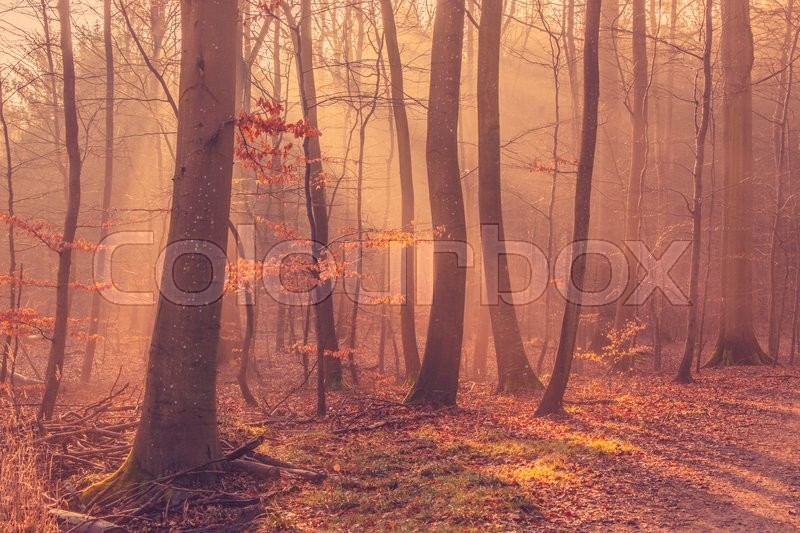 Stock image of 'Sunrise in a the forest mist in the morning'