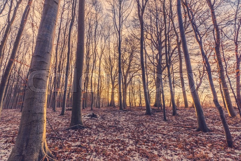 Stock image of 'Sunrise on a cold morning in the forest at wintertime'