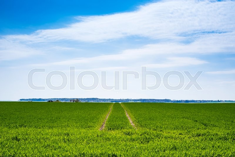 Stock image of 'Green field with dry tire tracks in the summer'