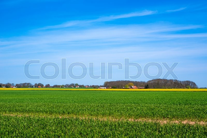Stock image of 'Landscape with green and yellow fields in the summer'