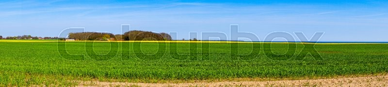 Stock image of 'Panorama landscape with a canola field in blue sky'