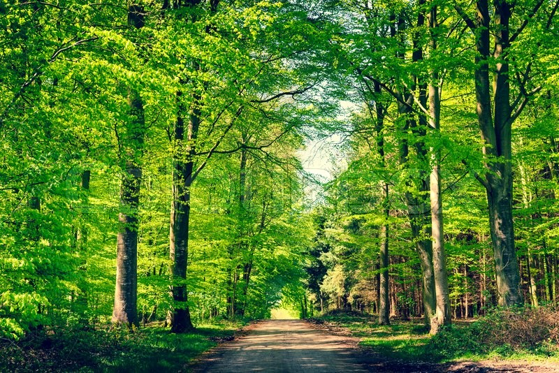 Stock image of 'Road in a green beech forest in the spring'