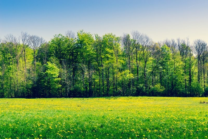 Stock image of 'Green trees on a field with yellow dandelions in the spring'