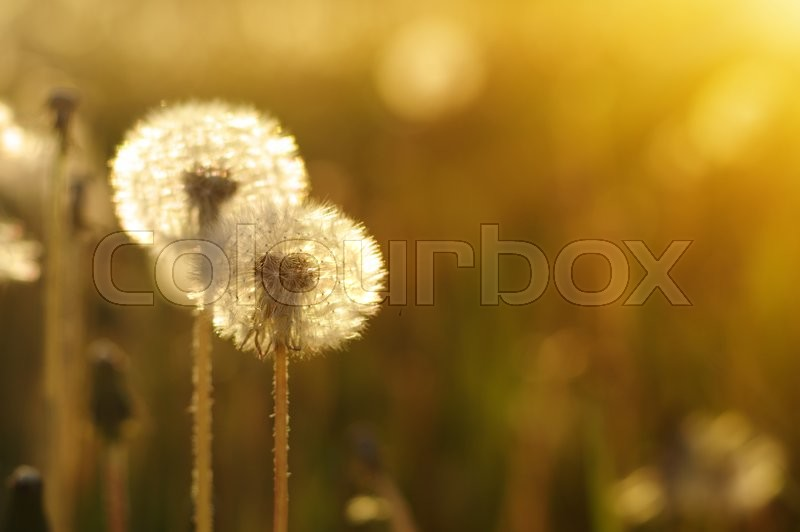 Stock foto af 'lys, solnedgang, closeup'