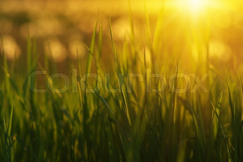 Stock image of 'Green grass background with sun beam. Bright natural bokeh. Soft focus. Abstract nature background .'