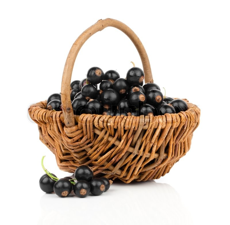 Stock image of 'Basket with black currant on a white background'