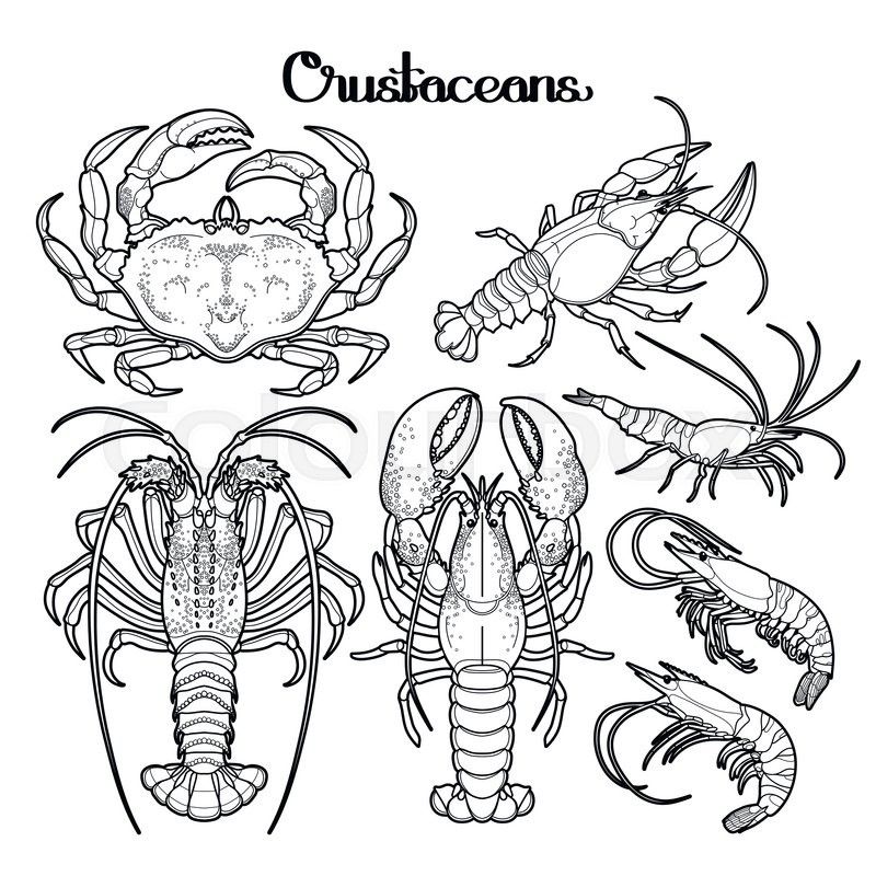 graphic crustaceans collection drawn in line art style