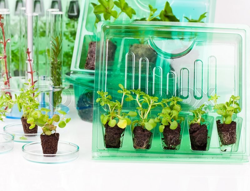 Stock image of 'Plants, seedlings for transportation  in plastic box, on white background'
