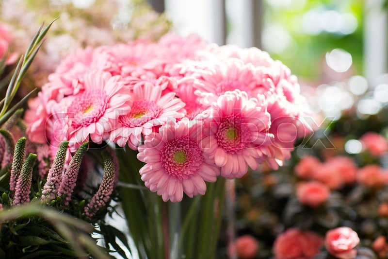 Stock image of 'gardening, floristry, sale, holidays and flora concept - close up of pink gerbera at flower shop'