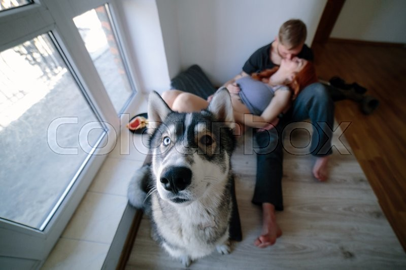 Stock image of 'husband, pregnant wife and dog resting near a large window'