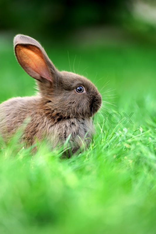 Stock image of 'Little rabbit on green grass in summer day'