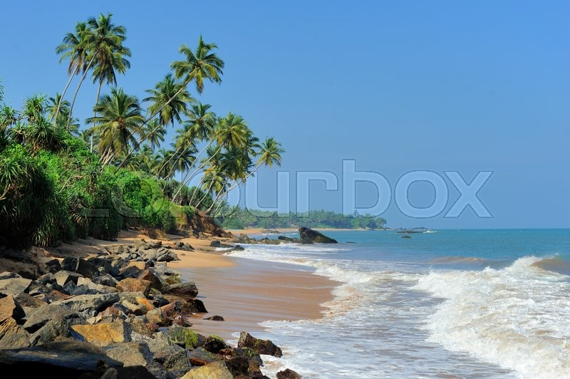 Stock image of 'Tropical beach with palm on exotic island'