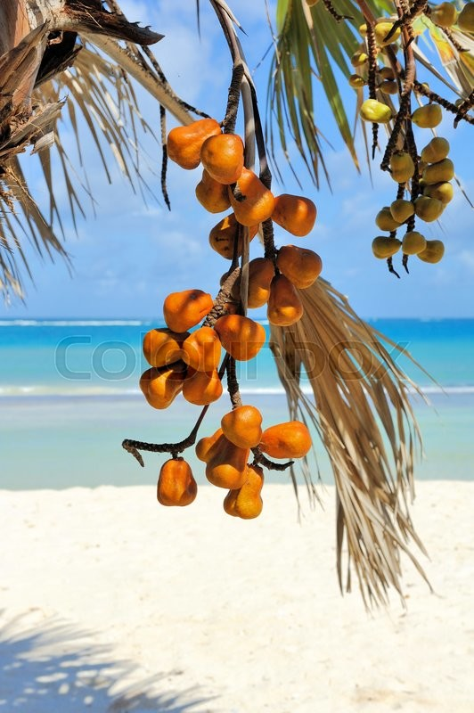 Stock image of 'Orange fruit on a branch. On blue ocean background'