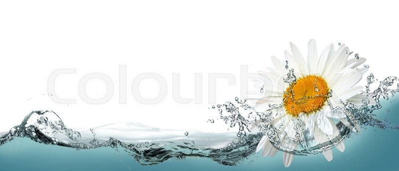 Stock image of 'Daisy flower on a background of water as an element of design labels.'
