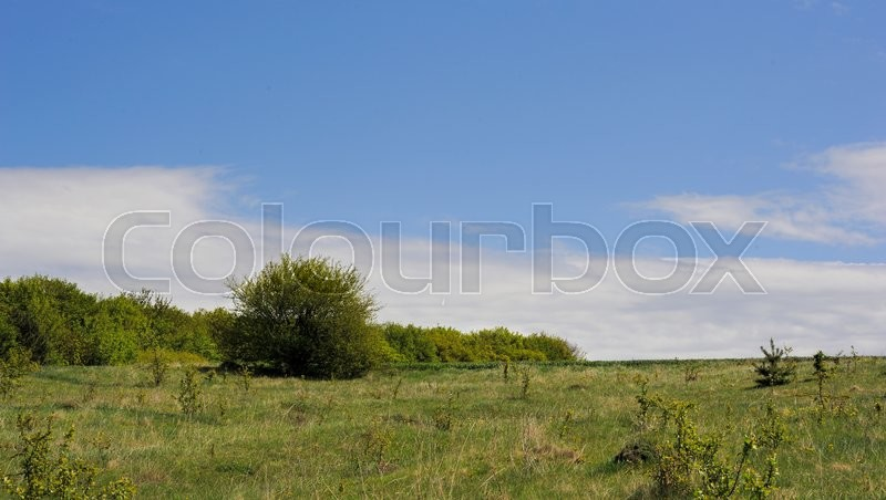 Stock image of 'field with trees and grass and a wonderful nebaneba'