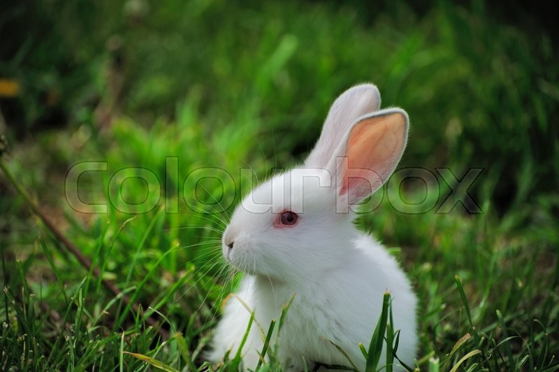 Stock image of ' Little white rabbit on green grass in summer day'