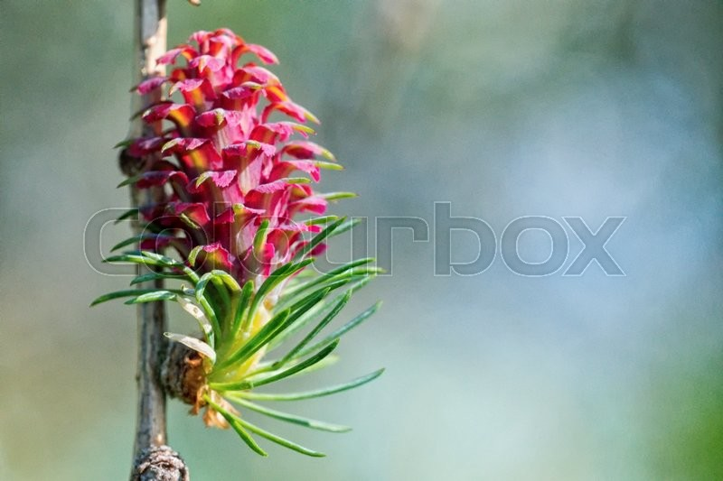Stock image of 'The young buds on the twig of a tree with blurred background'
