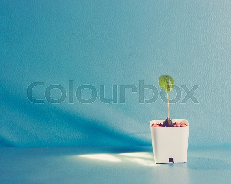 Stock image of 'Plant in a pot on the color leather surface background,vintage color toned image'
