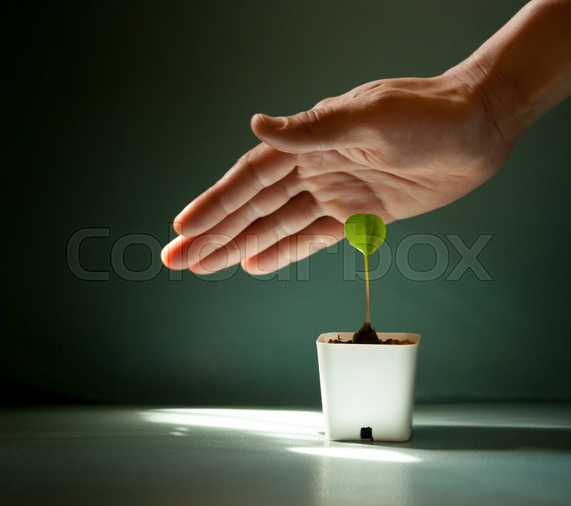Stock image of 'Human hands protecting young green plant on the color leather surface background'