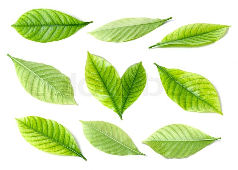 Stock image of 'Collage of beautiful green leaves isolated on white'