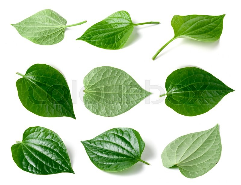 Stock image of 'Collage of Green betel leaf heart shape isolated on white background'