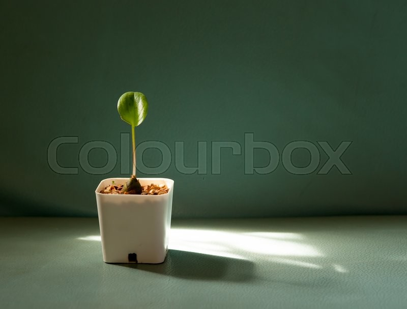 Stock image of 'Plant in a pot on the color leather surface background'