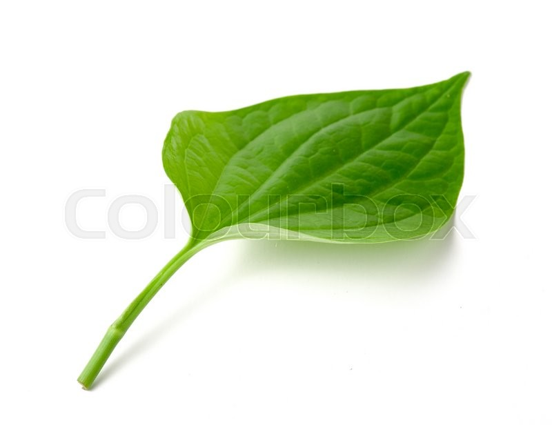 Stock image of 'Green betel leaf heart shape isolated on white background'