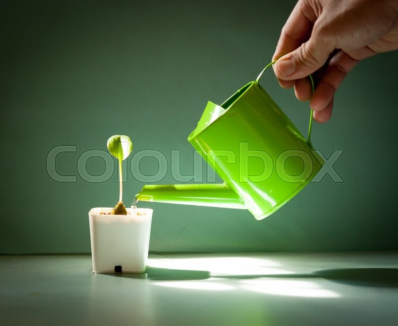 Stock image of 'Watering a small plant in a pot on the color leather surface background'
