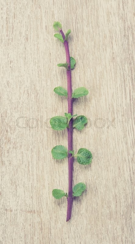 Stock image of 'Fresh mint on white wooden table,Top view,vintage color toned image'