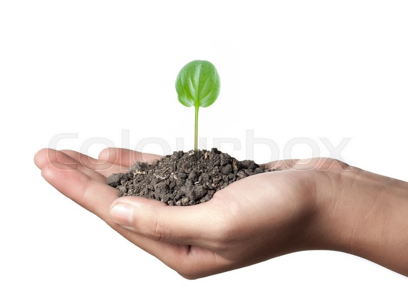 Stock image of 'Young plant in hand over white'