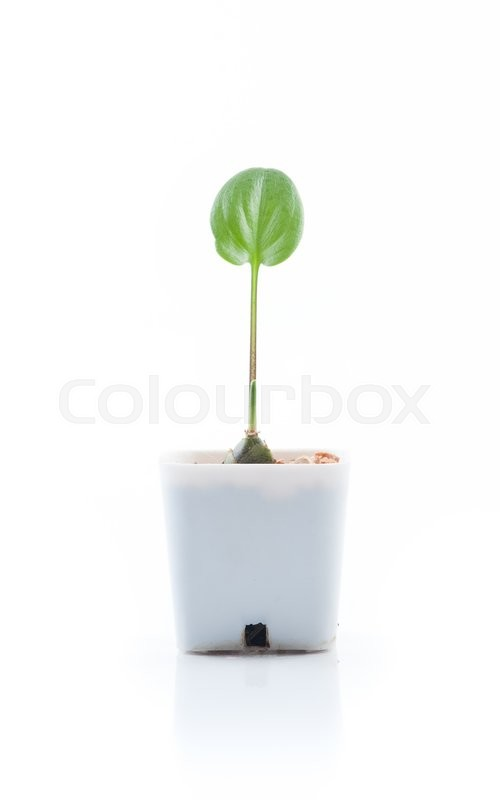 Stock image of 'Young plant in pot isolated on the white background'