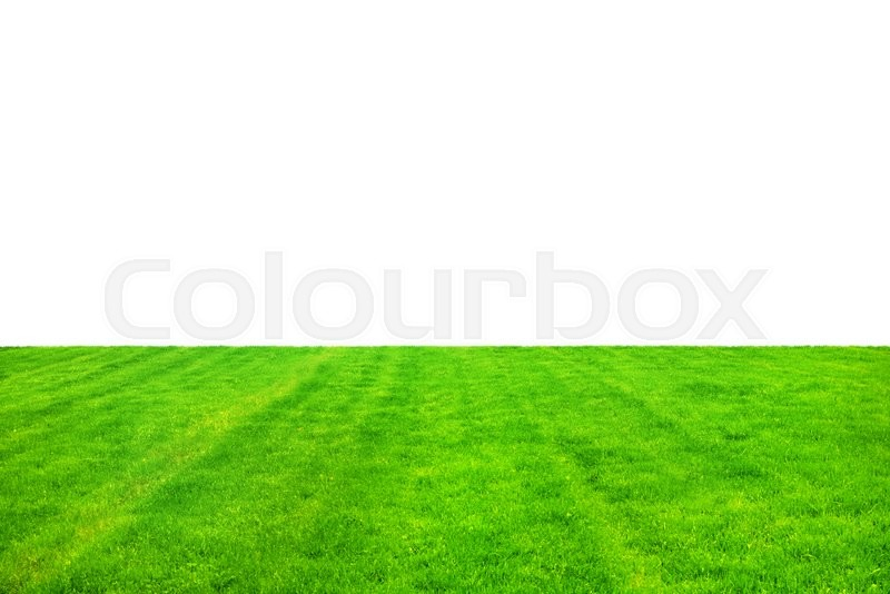 Stock image of 'Green grass isolated on white background'