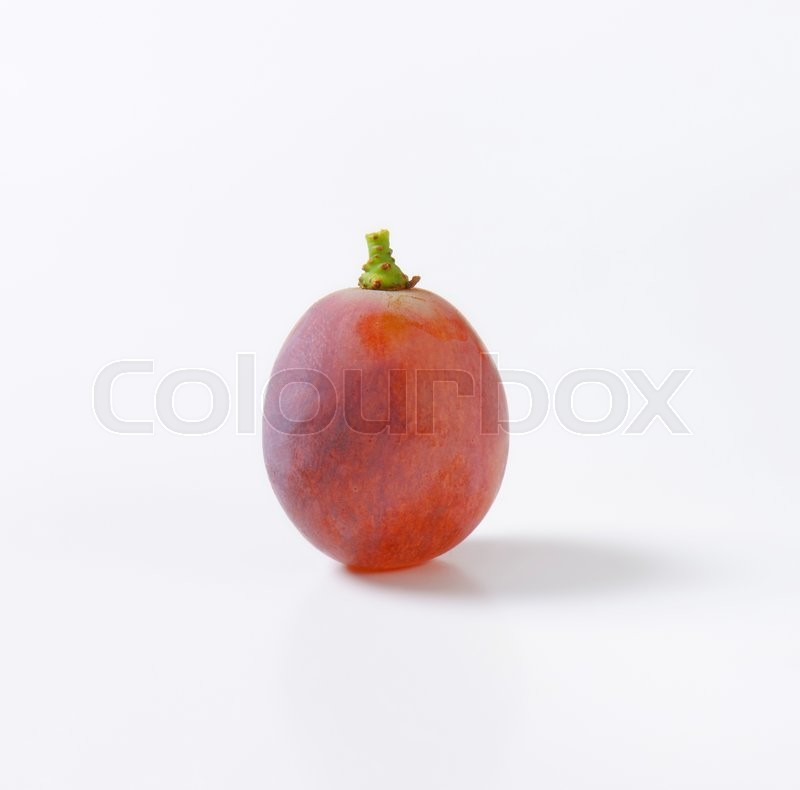 Stock image of 'Single fresh seedless red table grape'