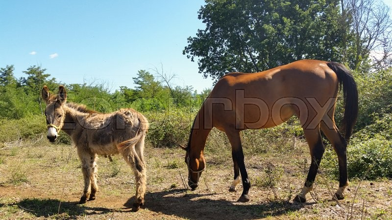 Stock image of 'donkey and horse together like two old friends'