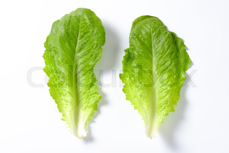 Stock image of 'two leaves of romaine lettuce on white background'
