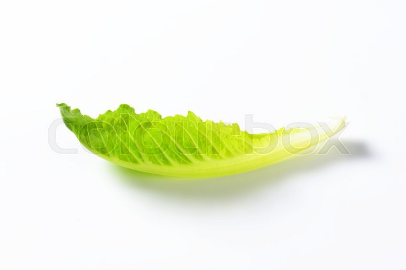 Stock image of 'single romaine lettuce leaf on white background'