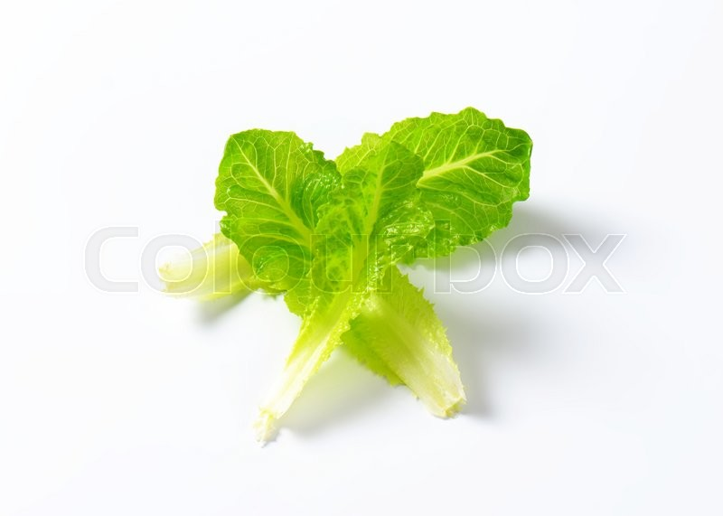 Stock image of 'leaves of romaine lettuce on white background'