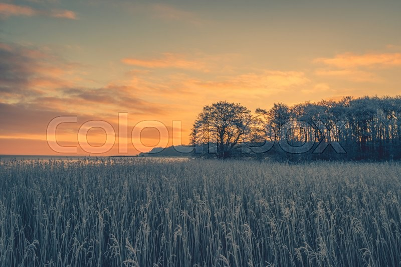 Stock image of 'Tree silhouettes in the winter sunrise on a cold morning'